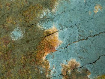 Properties of Household Mold